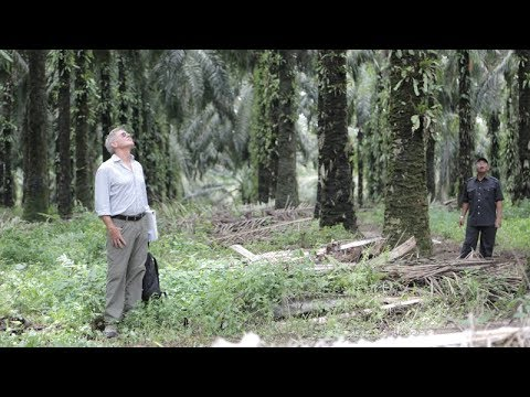 Harrison Ford Learns How Palm Oil Is Linked to Deforestation