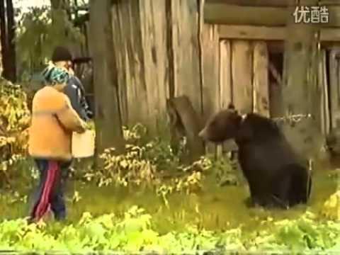 Con gấu bất ngờ tấn công người cho ăn