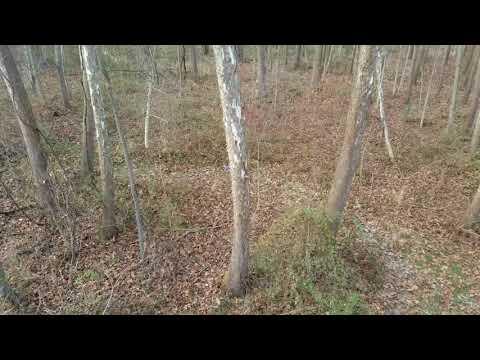 Ohio Public Land Bowhunting | Rut Action | Nov 2017