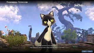 BLADE & SOUL Online(4game) - получаем кота помощника  (развлекательный обзор)