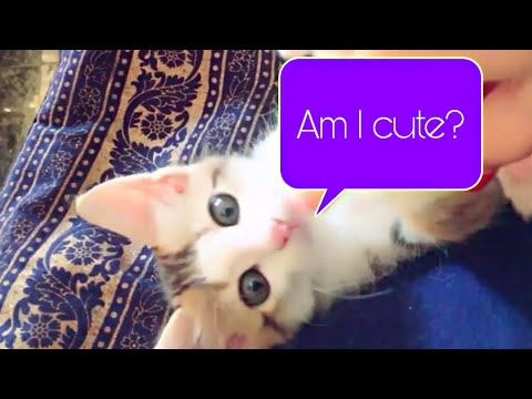 Brother sister stray kittens rescued update video|stray kitty's cuddling time|Milli's update| mar fy