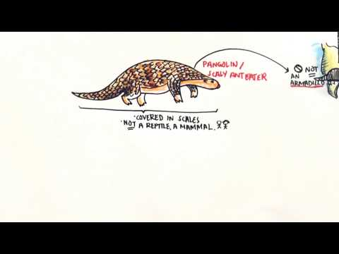 Science Education Videos by NSSE AG: Vertebrate Mammals in Singapore