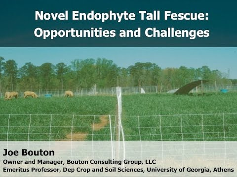 Novel Endophyte Tall Fescue: Challenges and Opportunities - Joe Bouton, Bouton Consulting