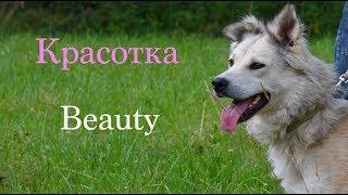 Молодая и красивая собака Красотка из Лесного приюта нашла свой дом.