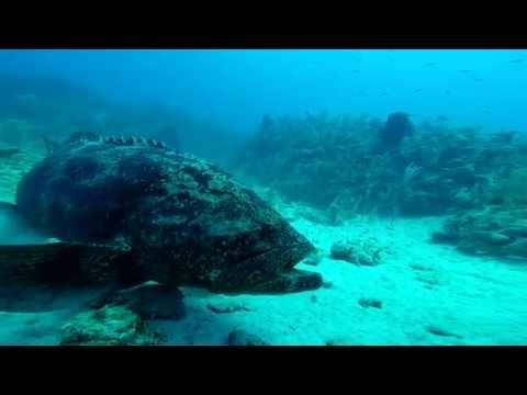 Diving Cuba's Gardens of the Queen National Marine Park