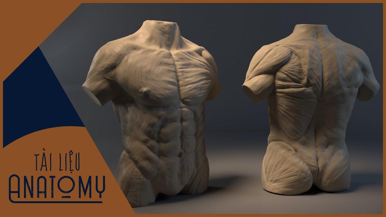 | Free Share | Tài liệu Anatomy và Sử dụng phần mềm gì để quản lí Reference? | 3D Easy |