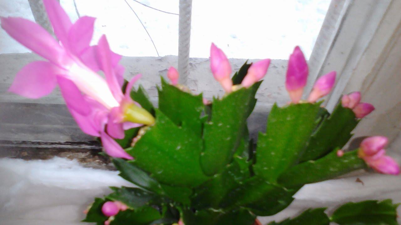 цветы в мусорке фото
