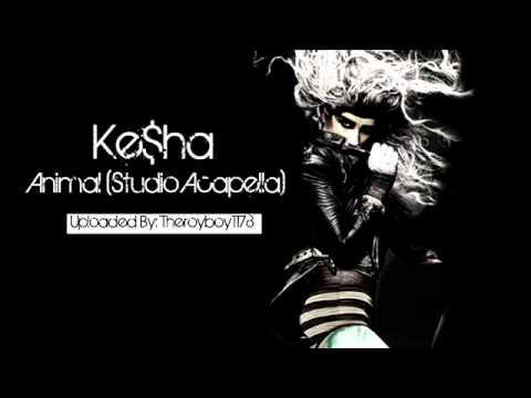 Ke$ha - Animal (Studio Acapella) (NEW!!)