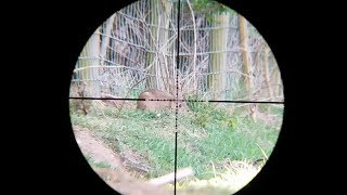 air rifle hunting pest control 2017 may