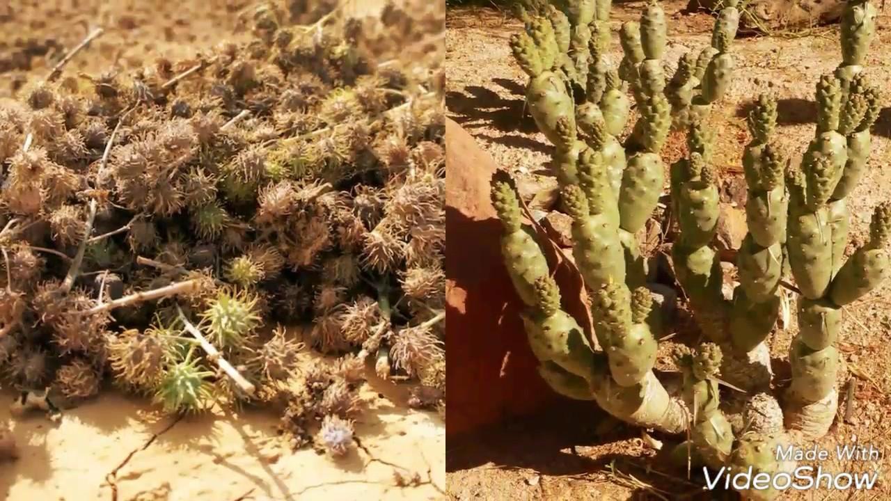 Thar desert culture and the living - YouTube  Thar desert cul...