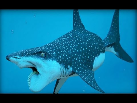 Ocean Predators - King Of Ocean & Sea Creatures (Nat Geo)