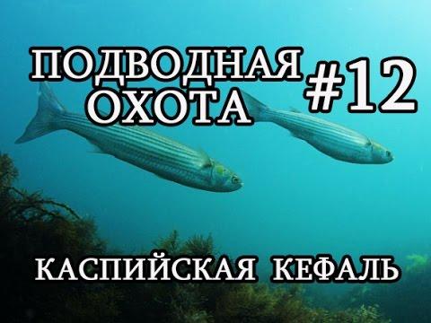 Подводная охота #12 Каспийская кефаль