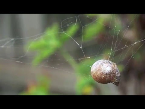 Spider Performs Amazing Engineering Feat