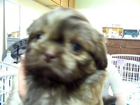 Puppies 1 2011 029