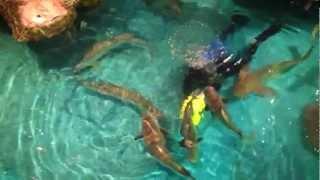 Девочка кормит рыбу как собак - Fishes like dogs