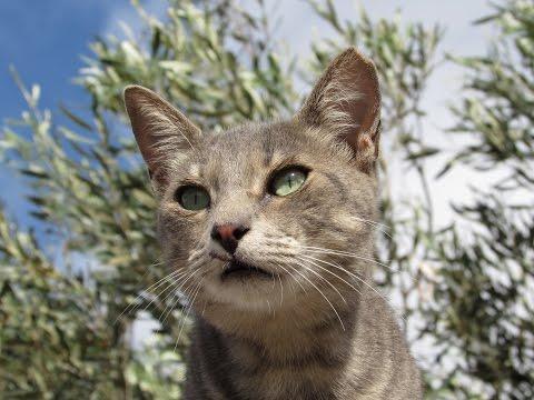 FUERTEVENTURA CAT RESCUE - ELBA SARA HOTEL HD