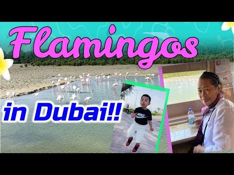 Ras Al Khor Wildlife Sanctuary Dubai Flamingos
