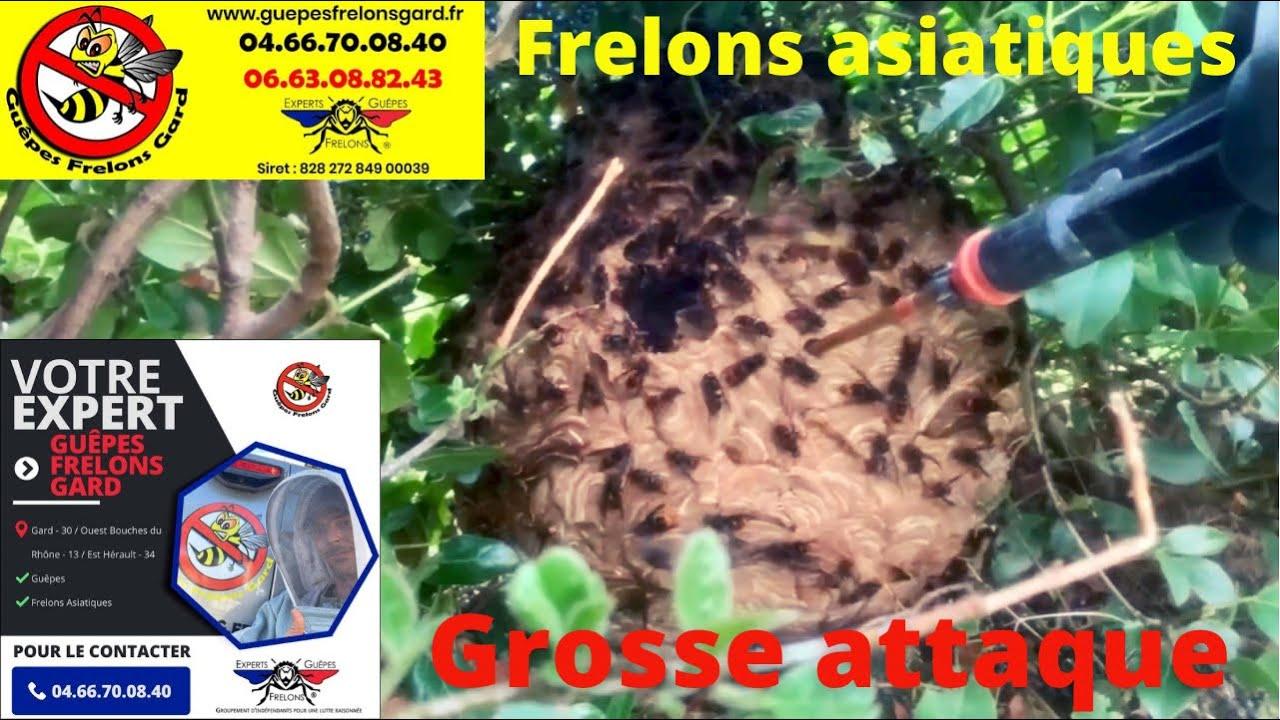 Frelons asiatiques à Marguerittes 30320