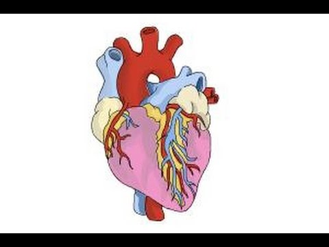 How to draw a real heart
