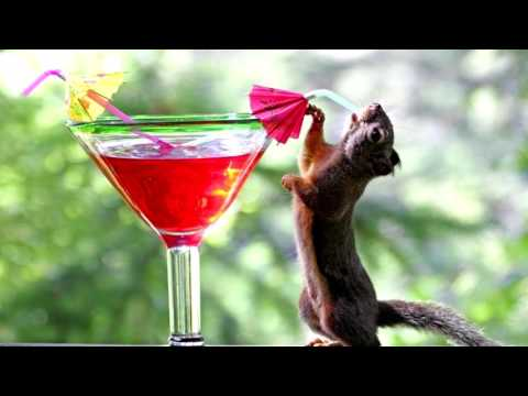 Funny Ringtone Drunk Squirrel Free Ringtones Downloads
