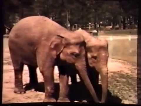 4 At Grant Park Zoo In 1955 (Atlanta, GA USA)