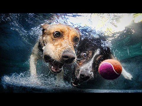 chien chats marrants piscine Hqdefault