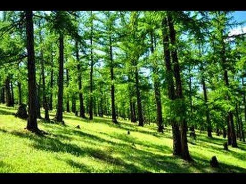 Corto: bosques de taiga de Mongolia | Global Ideas