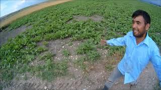 Tarım Vlog #8 Yağmurlama Değiştirmek Bu Kadar Zor Olmamalı.