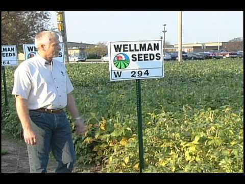 Wellman Seeds 2013 NON-GMO Soybeans