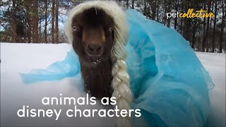 The Best Animals as Disney Characters