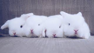 Baby Blue Eyed White Bunnies Waking Up