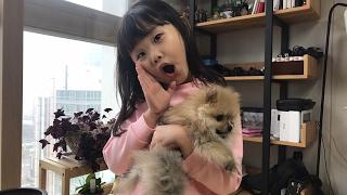 라임의 강아지 뽀뽀 훈련시켜요! 귀여운 애완견 훈련