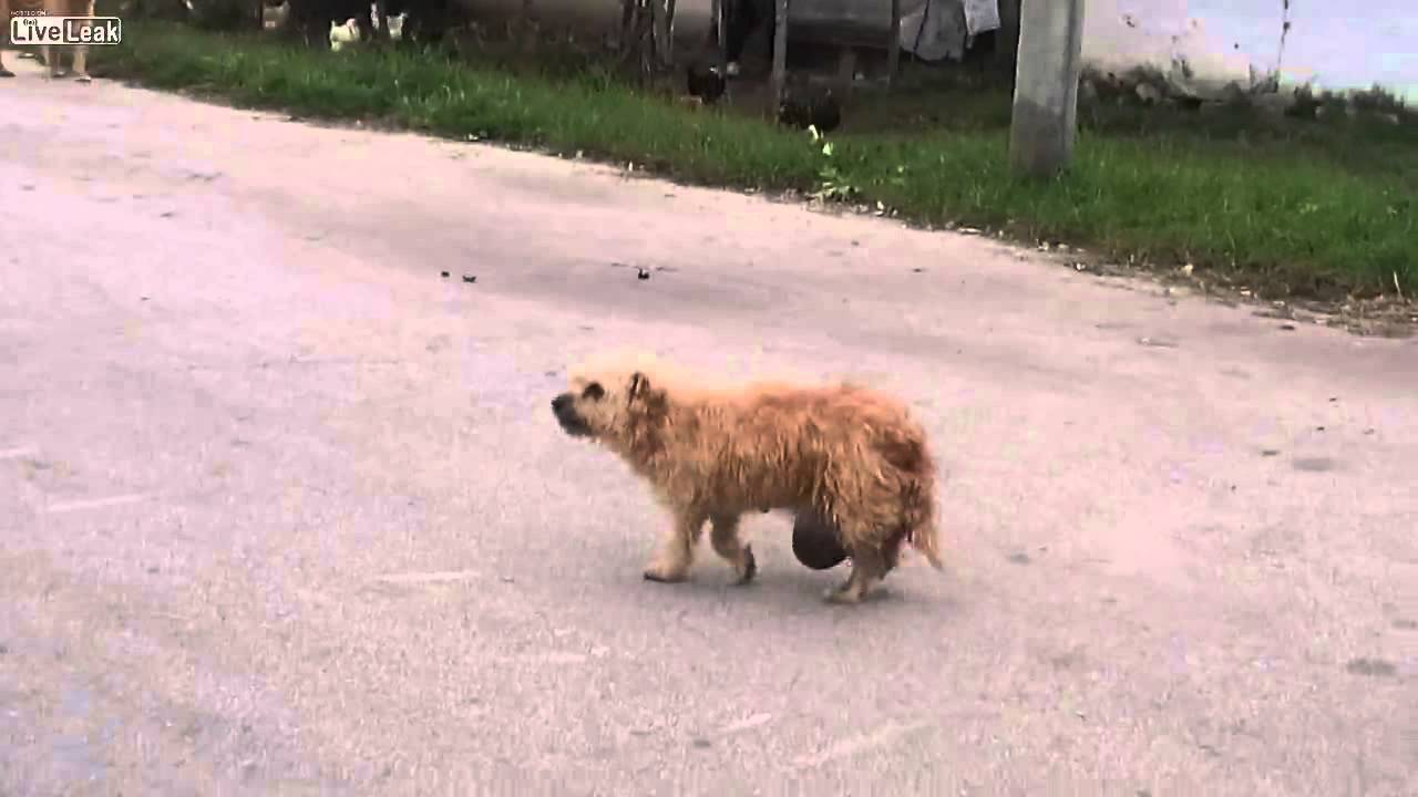 Tiny Dogs For People Who Like Big Dogs