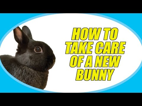 HOW TO TAKE CARE OF A NEW BUNNY!
