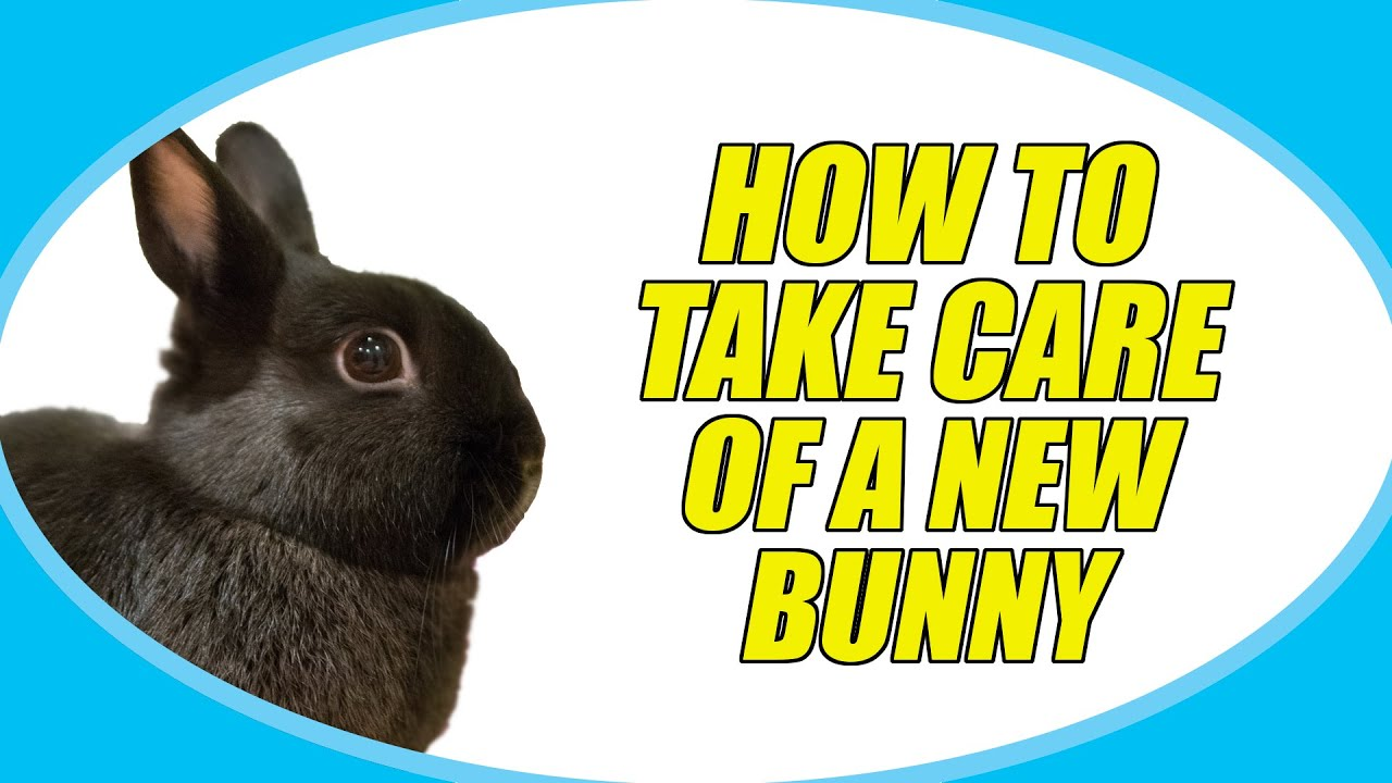 Can you take rabbits a bath