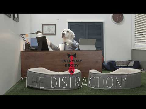 "Everyday Brody - ""The Distraction"""