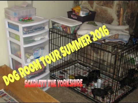 DOG ROOM TOUR AND YORKIE PUPPIES PLAYING
