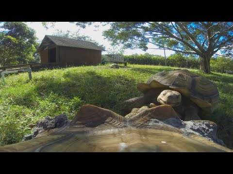 Sulcata Tortoise, Day In The Life : Kamp Kenan S3 Episode 18