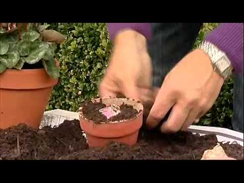 Alan Titchmarsh Container Gardening YouTube