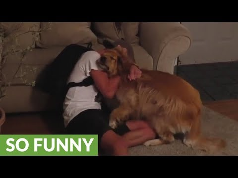 Golden Retriever reunited with owner after 5 months apart
