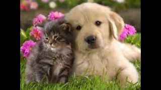 Самые милые котята и щенки!