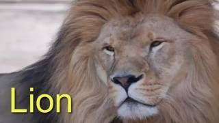 Дикие животные для детей на английском языке | Названия и голоса животных | Учим диких животных