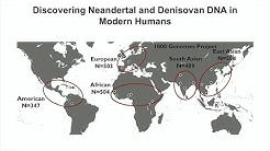 Tales of Human History Told by Neandertal and Denisovan DNA That Persist in Modern Humans