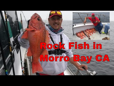 Huge Rock Fish on Endeavor Morro Bay Landing California