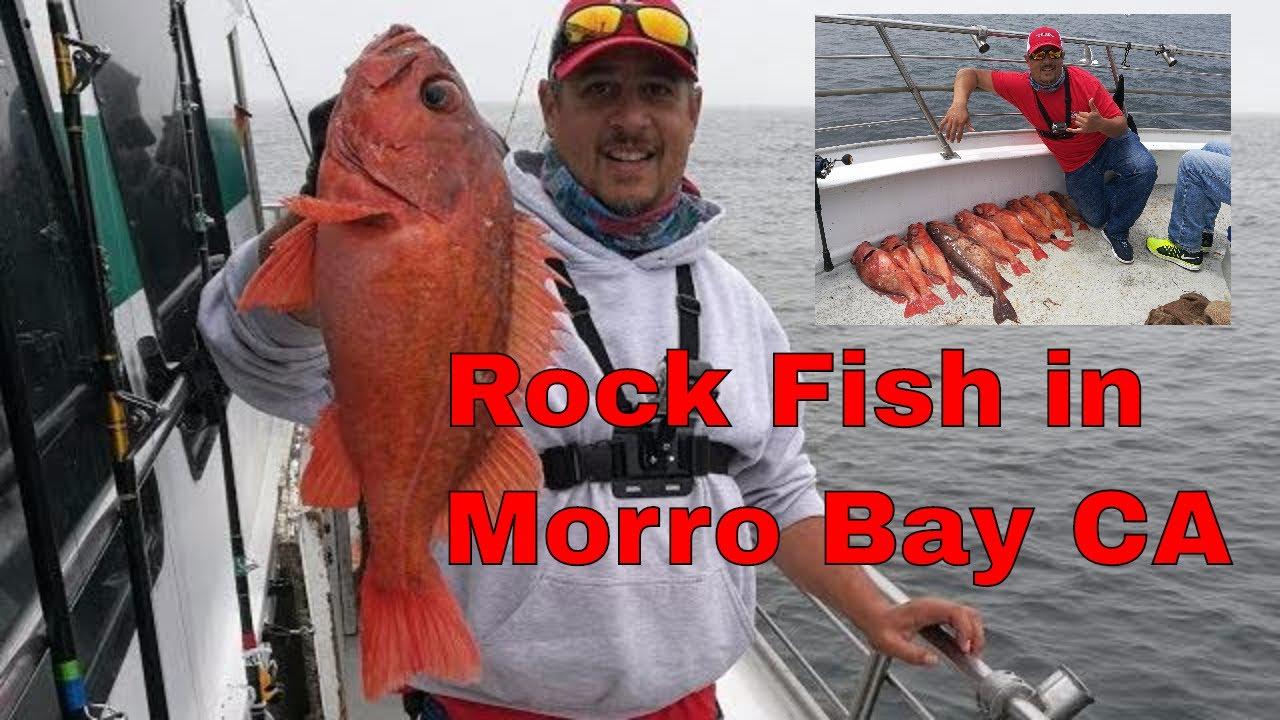 huge rock fish on endeavor morro bay landing california. Black Bedroom Furniture Sets. Home Design Ideas