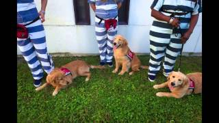 Service Dog Training Program With Collier Inmates