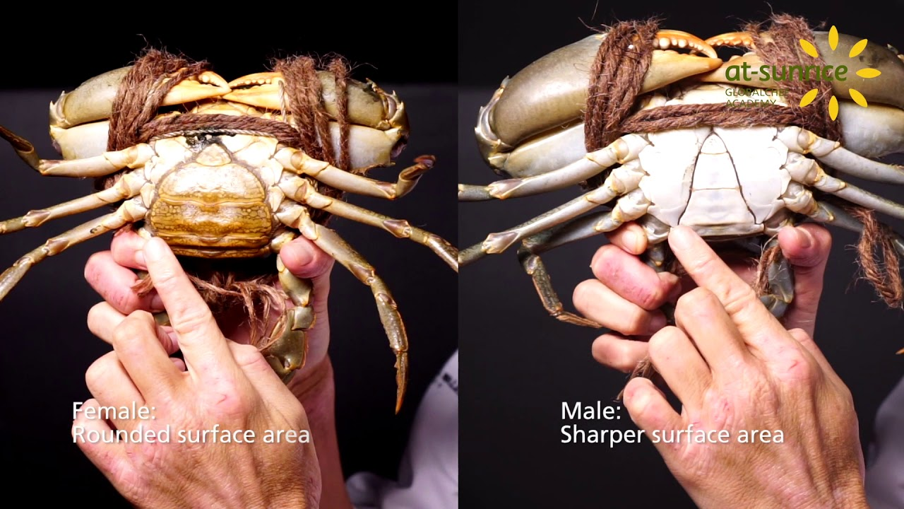 What does crabs look like on woman