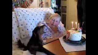 Dachshund Marne Sings Her Heart Out To One Of Her Favorite People