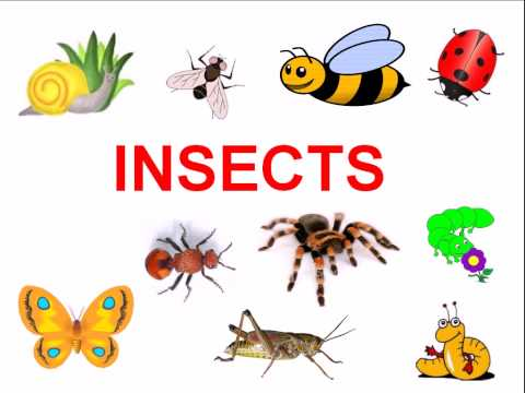 Insects and bugs for kids  YouTube