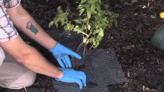 Keeping Rodents Out Garden